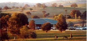 Golf-Kangaroos-Bigga