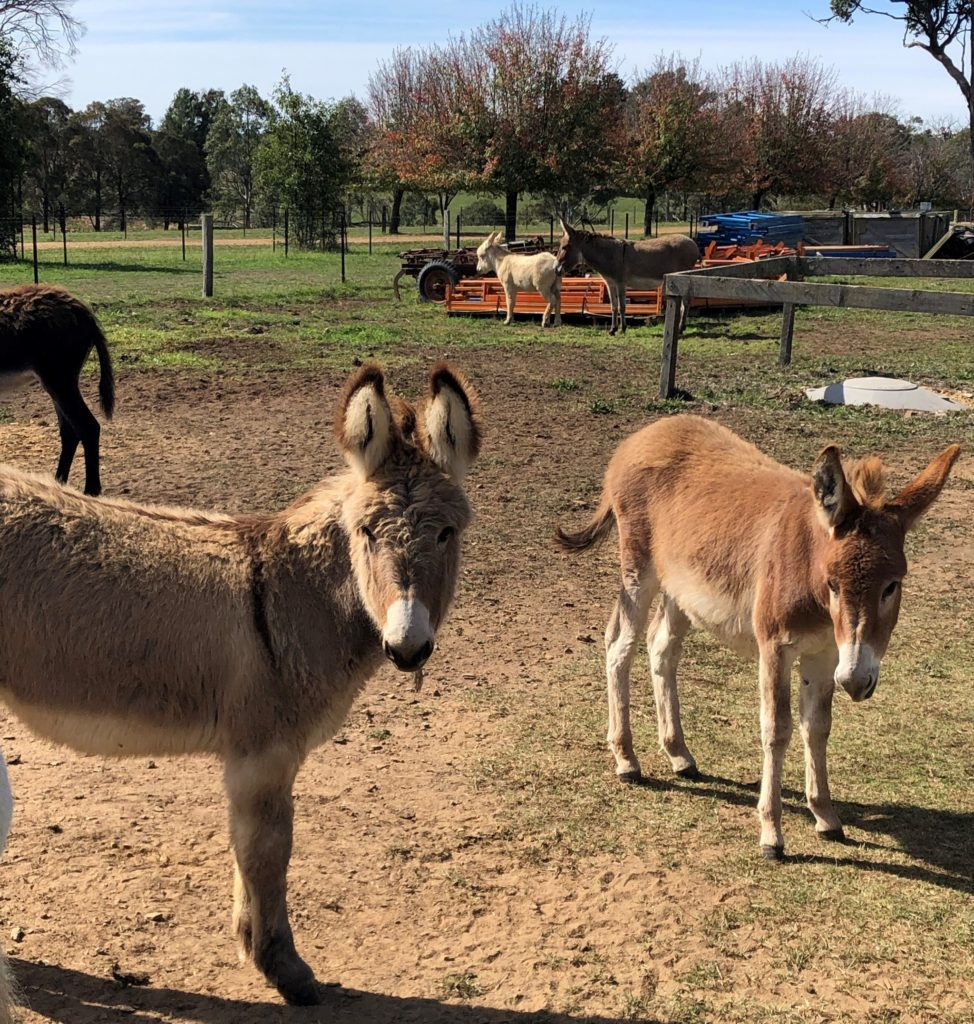 Nelly and Nancy – our new donkeys!