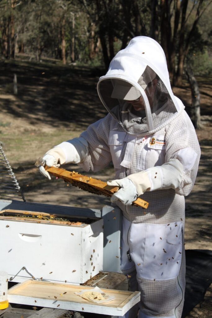 Book a Beekeeping Experience – Calenny Orchard